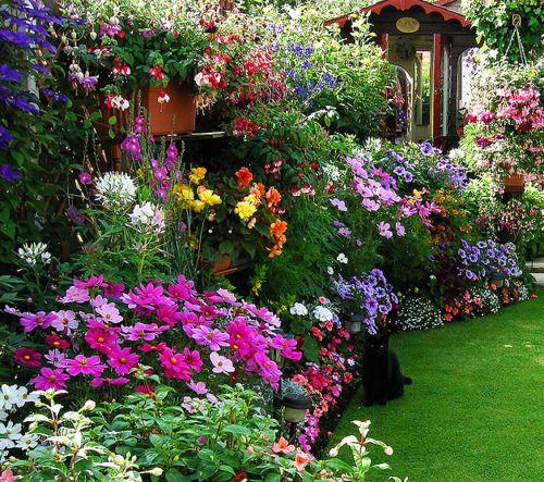 I need a gardener