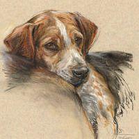 'Beagle' portret, 30x40 cm, pastel, €750 incl. lijst