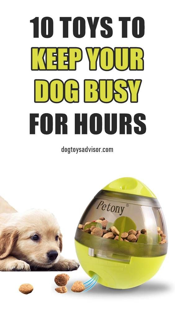 Need Some Easy Ways To Keep Your Dog Busy When They Re Home Alone