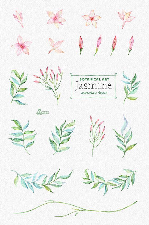 Jasmine. Botanical art. Floral Elements wreath by OctopusArtis …