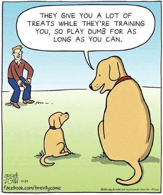 kluger hund!