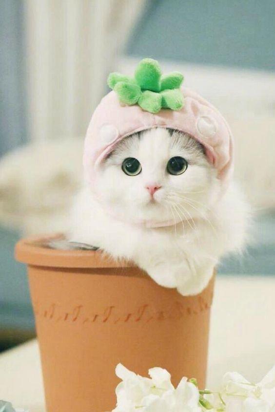 Pinterest Muffii Meybe Cute Adorable Smol Smolbean Kitty