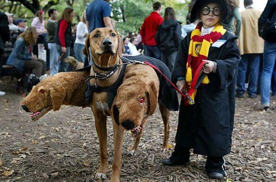 les plus beaux deguisement halloween pour enfant harry potter rouffu   Splendides déguisements Halloween pour enfant   Walter White troll Ru...