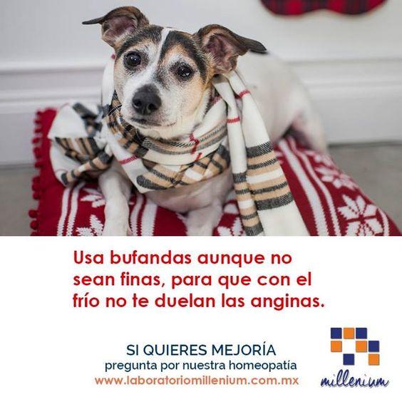 En invierno entra a la garganta el aire muy frío por eso nuestro #perrosabio te recomienda usar bufanda.