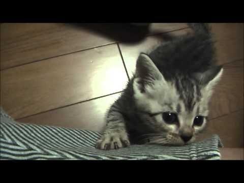 山道で保護した子猫