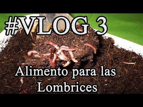 Vlog 3 Comida Para Lombrices Adictos A La Permacultura Youtube Permacultura Comida Lombriz