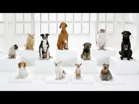 the imperial march by doggies!!! love it!