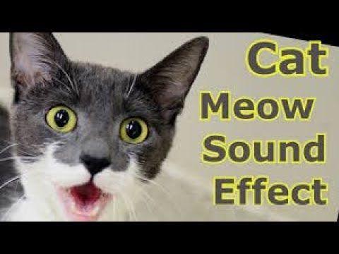 Cat Sound Effect Hq Online Video Cutter Out 0 Com Cat Noises Kitten Noises Cats