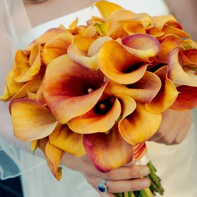 Mango Calla lilies my all time favorite flower....