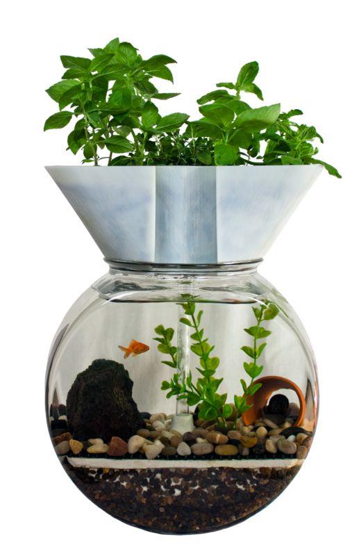 L 39 aquaponie aquaponic pinterest for Plante bocal poisson rouge