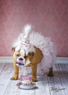Happy Birthday to me!! Bull dogs by Lisa Jane-