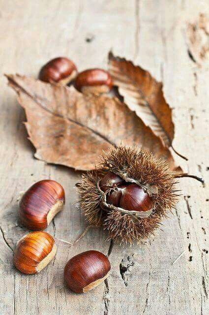 Chestnut.  I love the lovely wood tones of these.    Herfst