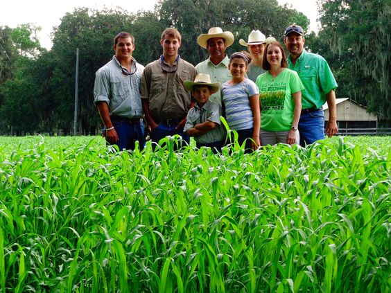 Tampa Tribune - Sunflowers on the Ranch