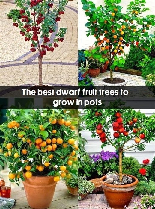 14 Healthy And Ornamental Fruits To Grow In Containers Plants Miniature Fruit Trees Fruit Garden