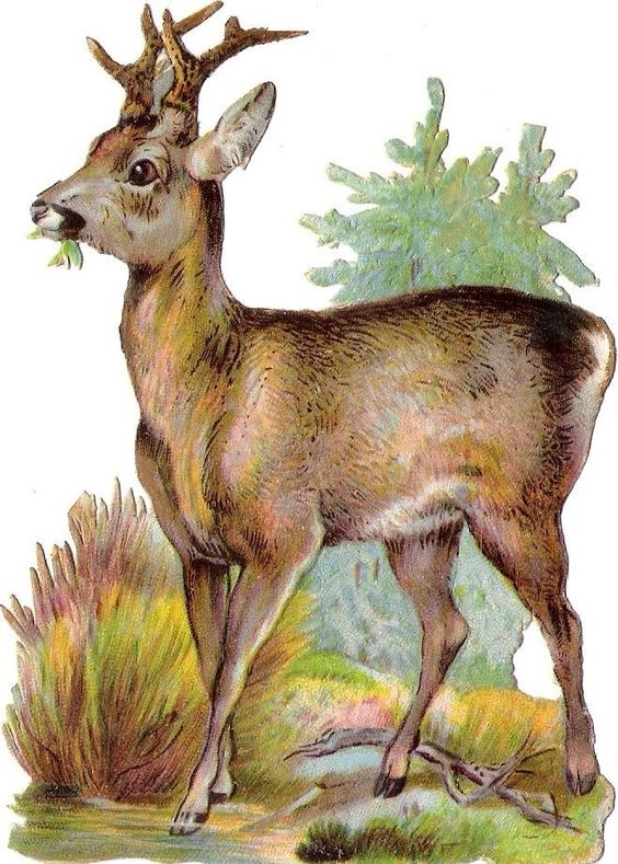 Oblaten Glanzbild scrap die cut chromo Reh  12cm  roe deer Wald Tier:
