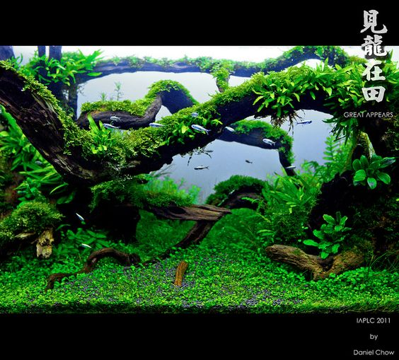 Aquascaping, Photo Editor Online And Drift Wood On Pinterest