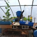 Build a vertical aquaponic veggie & fish farm for small yards & houses