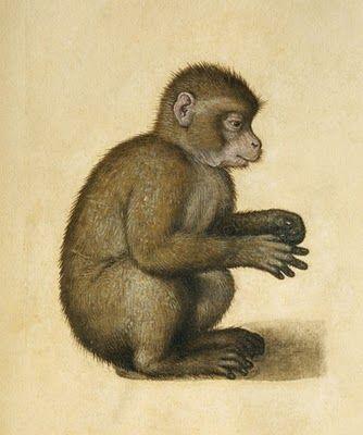 Albrecht Dürer. (Alberto Durero): Monkeys Scare, Art Albrecht Durer, Monkey Albrecht, Animals In Art, Albrecht Dürer, Durer Monkey