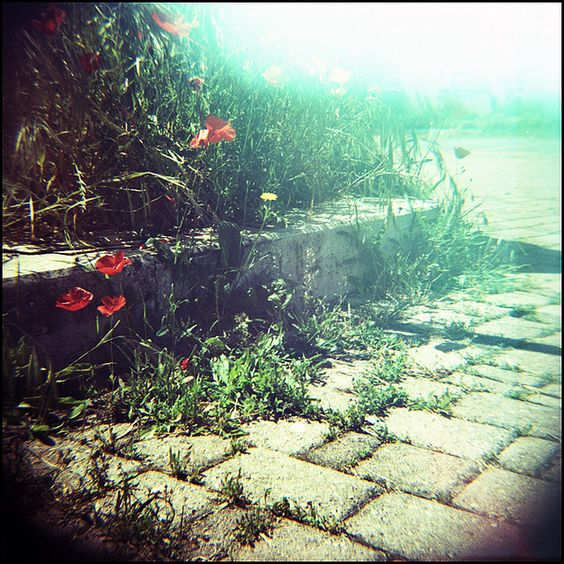 http://www.flickr.com/photos/kimmika/