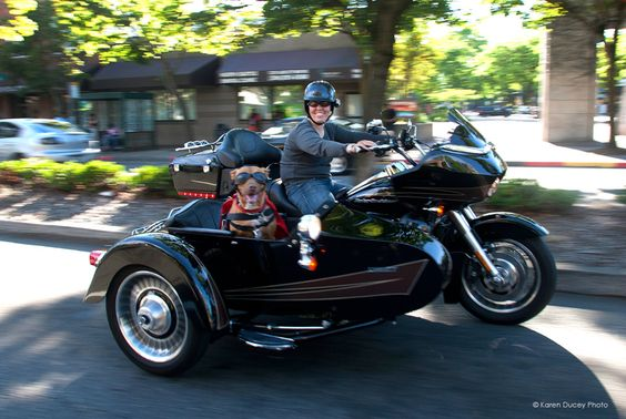 Let's Go, Lucy! Pit Bull Rides Shotgun on Mom's Motorcycle ...