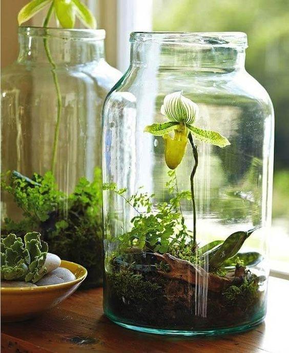 Jars as planters for indoor plants #gardenIdeas #garden #gardening #plants #homeDecor #indoor