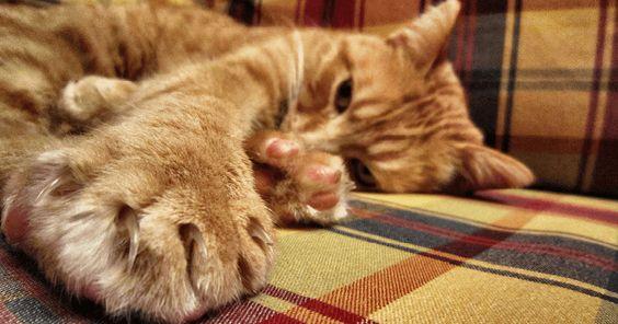 Aïe Aïe Aïe! Ce n'est jamais agréable lorsqu'on rentre du travail ou qu'on est tranquillement installé sur le canapé, de se faire sauter dessus par son chat toutes griffes et crocs dehors!