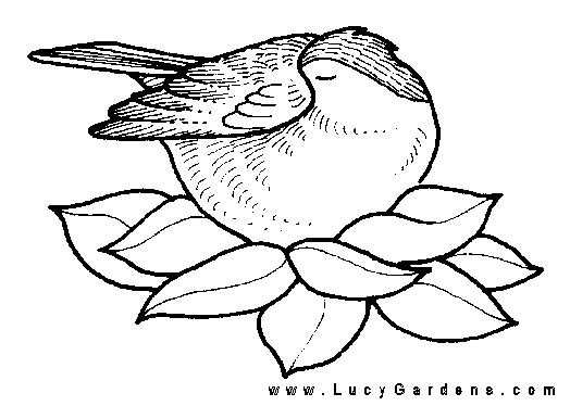 Coloring Pages Bird Nest Page Sheet
