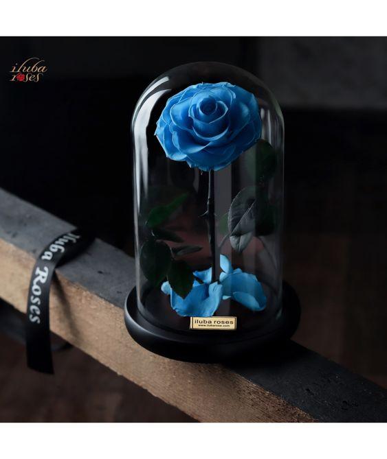 وردة ايلوبا روز فيروزي داخل فازة زجاجية Gifts Rose Gift Blue Rose