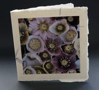 Unique greetings card design for birthdays and Easter. Card without a specific written message. This beautiful photograph of hellebore flowers by photographer Jonathan Leach is mounted on handmade Indian paper and comes complete with a handmade paper envelope. All profits from this card sale goes to support the charity lepra.  Price £3.50 P&P included.