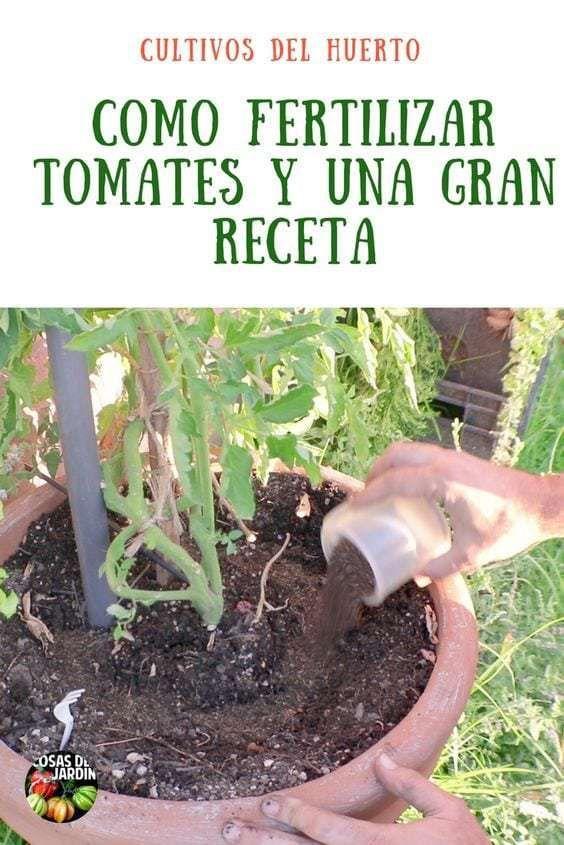 Como Hacer Un Buen Fertilizante Para Tomates Y Como Fertilizar Tomates Cosas Del Jardin Plantas De Tomate Cultivar Tomates Cultivo De Hortalizas
