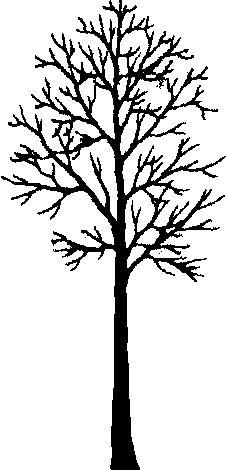 Alder Tree Tattoo 83502 Timehd