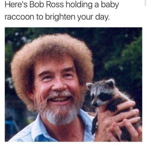 Literally Just 17 Wholesome Memes To Start Off The Week Right Bob Ross Baby Raccoon Funny Pictures
