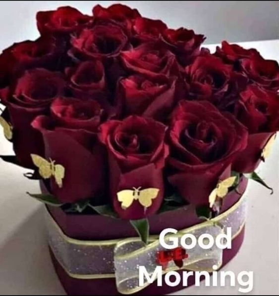 Good Morning Flower Images Download For Whatsapp Best Good Morning Flowers Images Beautiful Good Good Morning Flowers Good Morning Msg Good Morning Roses