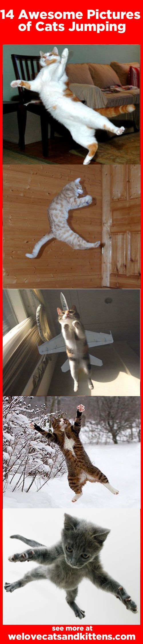 14 Awesome Pictures of Cats Jumping