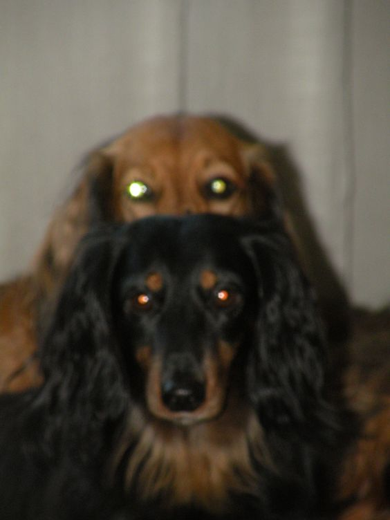 doxie aliens