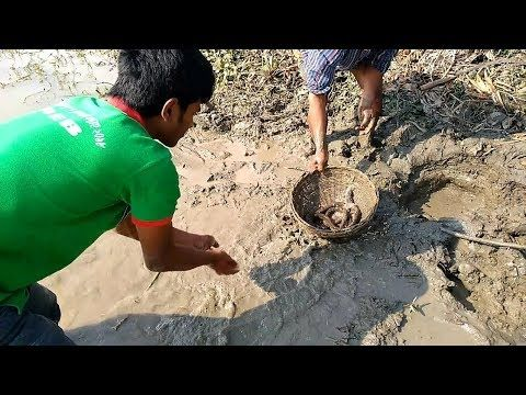 Amazing Fishing Videos Kuche Kuchia Fish Catching From Pond Fishing Videos Pond Catch