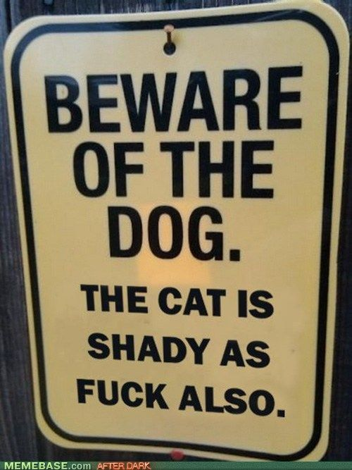 Lol.: Dogs And Cats, Dog Cat, Beware Of Dog, So True, Funny Stuff, Shadycat, So Funny