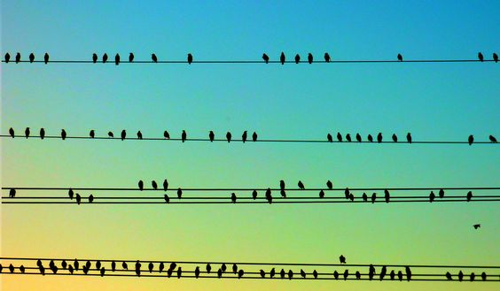 Birds and Wires - Jon Lander -c copyright 2015
