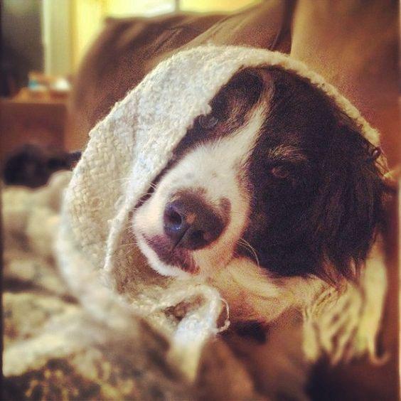 Fozzy Riding Hood