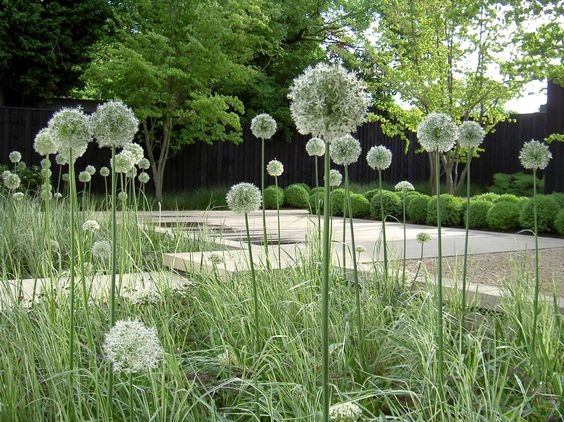 White allium grasses boxwood concrete gravel for Garden trees london