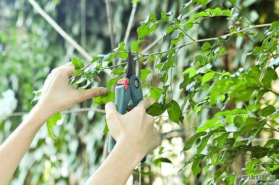 التقليم الزبيرة لماذا لا تقوم به بنفسك الهندسة الزراعية Tree Service Tree Removal Tree Removal Service