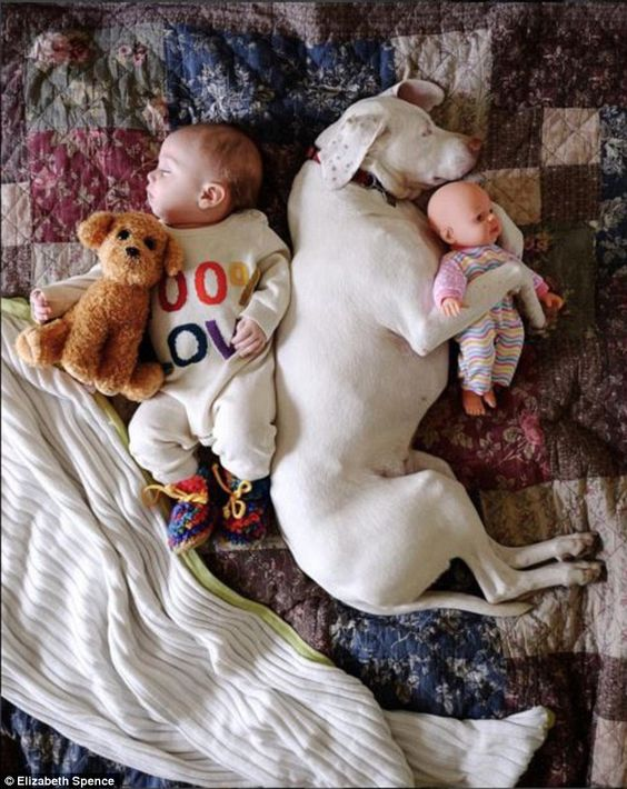 To each his own: The youngster cuddles his toy dog, while the real canine cuddles her litt...: