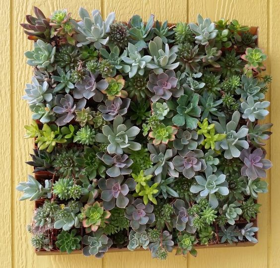 1 Fun DIY Living Succulent Wall, perfect for any home, restaurant, or hotel decor! Succulents, Living Wall, DIY, Outdoor Decor by TheSucculentSource on Etsy