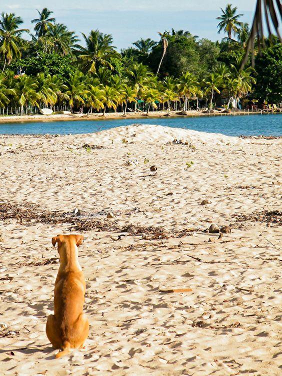 Cachorro em Barra Grande - BA