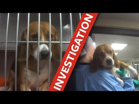 Take Action Now To Demand Dow Agrosciences Stop The Cruel And Unnecessary Testing On 36 B Humane Society Animal Protection Organization Undercover Investigator