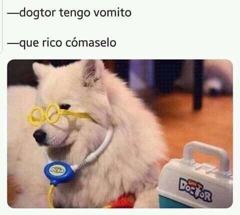 Pin De Juanaseoka En Memes Memes Perros Perros Graciosos Memes Divertidos Sobre Perros
