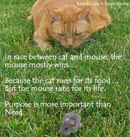 In the race between the Cat and Mouse….