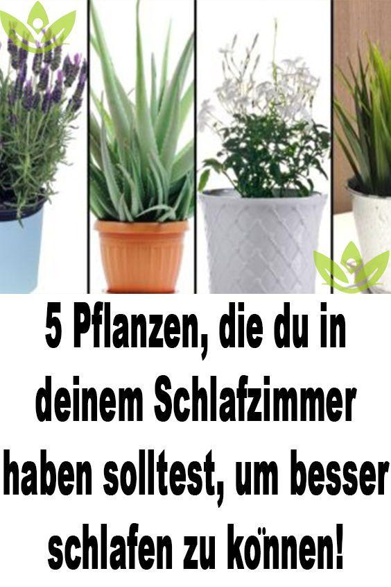 5 Pflanzen Die Du In Deinem Schlafzimmer Haben Solltest Um Besser Schlafen Zu Konnen In 2020 Besser Schlafen Schlafen