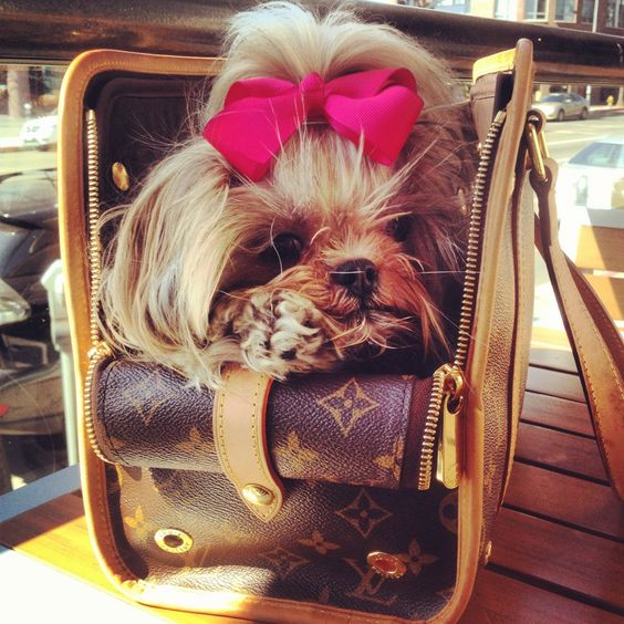 Shih tzu love! Louis Vuitton dog puppy purse. Pink bow.  My sweet bitch Mei Mei. Baxter bag.