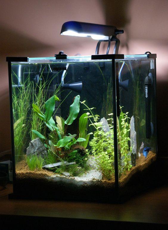 Aquael shrimp set nano Fish Keeping Pinterest Shrimp, Cubes and ...